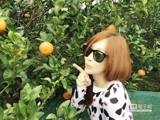 王心凌在阿姨家的果园享受采收橘子的乐趣。