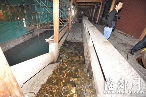 粪水从驳岸流入安泰河