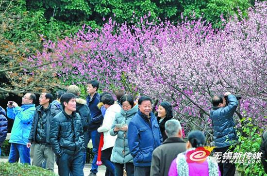 近日,市民在梅园景区赏梅。今年春节长假恰逢梅花盛开期,虽然天气有些阴沉,但每天前来梅园赏梅的游客川流不息,日均客流超过5万。(刘芳辉 摄)