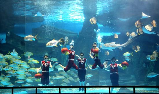 元宵节当天,在常规的水下剧场表演中,景区专门添加了闹元宵的喜庆元素,游客可以欣赏到美人鱼水下打灯笼闹元宵、美轮美奂的水中芭蕾表演。美人鱼水中曼妙的舞姿,高清水幕呈现的视觉冲击,悠扬灵动的音乐旋律,让游客感受了泉城海洋极地世界美人鱼表演的独特魅力。