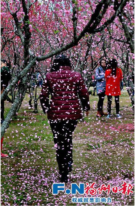 """游客为拍照拼命摇树 称""""花总是要落的"""""""