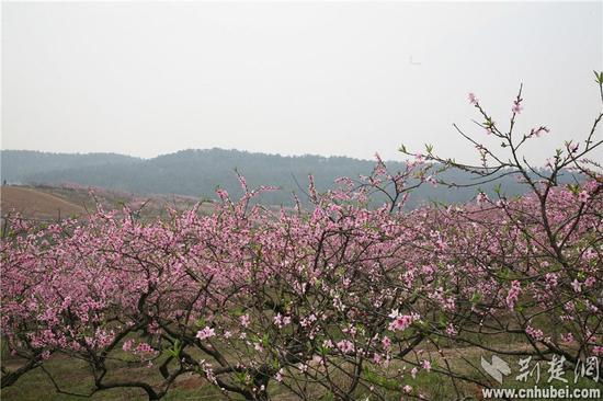 三生三世十里桃花的葫芦丝谱