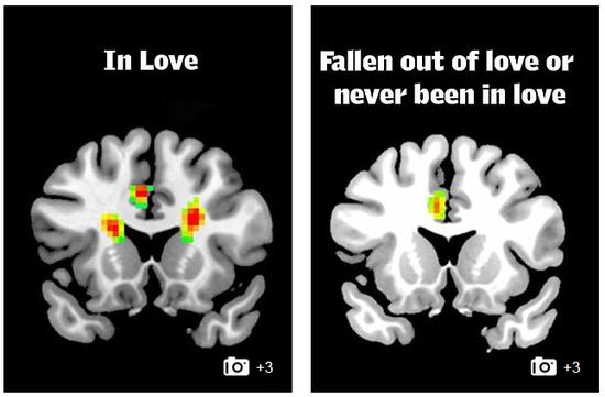 如何判断一个人是否遇见真爱的测验,科学家一项最新研究已经为此铺路。
