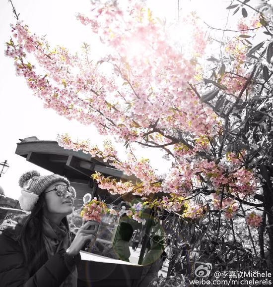 李嘉欣赏樱花