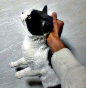 养猫的人都知道,用手从颈背处抓起猫的时候,猫会一动不动。