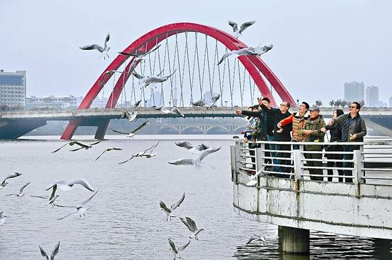 旌湖边上的彩虹桥附近的观景台,成为德阳市民与红嘴鸥同乐的好地方。