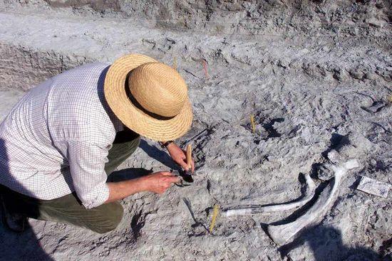俄罗斯托姆斯克州立大学的古生物学家,在基亚河沿岸的岩石层发现新种恐龙,据估计身高可能高达20米。
