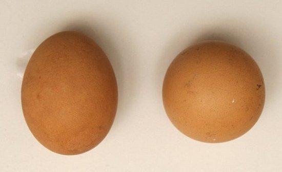 """英国母鸡产下完美的""""圆蛋"""" 卖出700美元"""