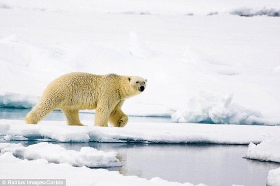 辛普森先生认为,从地球上猿类和人类的体型来看,智慧生物要想存活下去,体型必须大于一定程度。他发现,如果外星球存在智慧生物的话,这些生物的体重要达到650磅(约合300千克),相当于一只中等体重的北极熊。