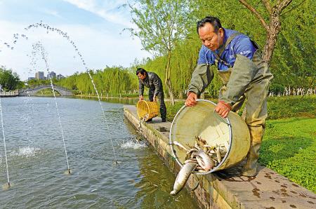 养护人员正在院士公园河投放鱼苗。