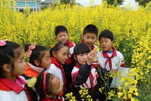慈溪1个小学现农耕园教材里开着金灿灿油菜花校园小学生v小学图片
