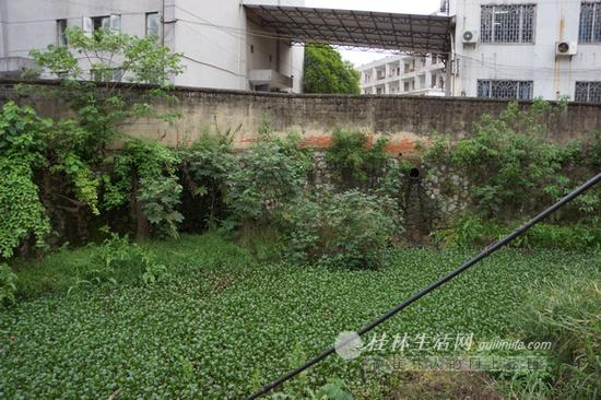 走进桂林工业技工学校,从坍塌的一侧围墙向外看,灵剑溪几乎被水葫芦等浮游植物铺满,对面的排污管道有污水不断流入溪中。