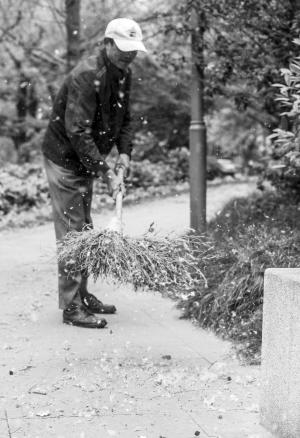 江东一公园里,保洁人员忙着清理飘落的柳絮。