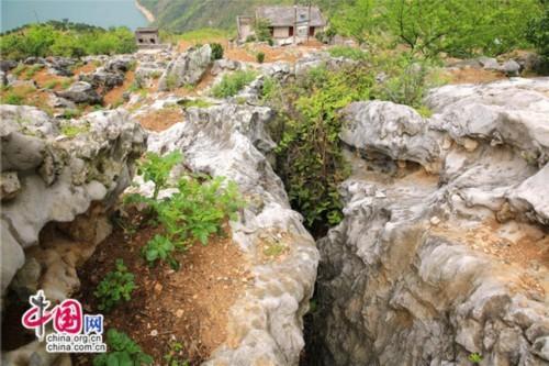 据推算,应该是长江三峡岸边目前发现的最大规模石林