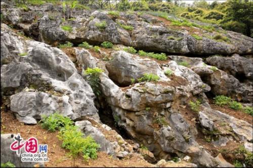 长江三峡西陵峡岸边 发现当地最大规模石林
