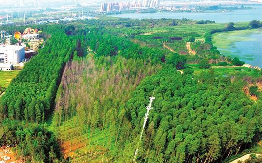 图为:东湖水杉湿地
