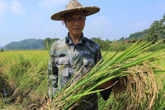 【第13期】父亲的水稻田