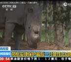 肯尼亚警卫守卫雄白犀牛