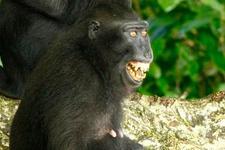 研究称猴类能感觉焦虑和恐惧等复杂情绪