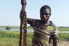 你敢吃吗:尼日利亚青蛙烤串味道比鱼好