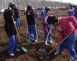 郑州义务植树基地苗木保存率逾85%