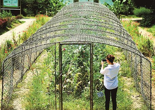 植物园罂粟频遭游客偷摘
