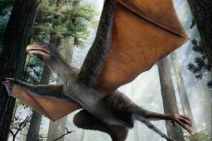 中国学者发现具有似蝙蝠翅膀小型恐龙化石