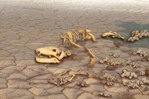 研究称气候变化将致1/6物种灭绝