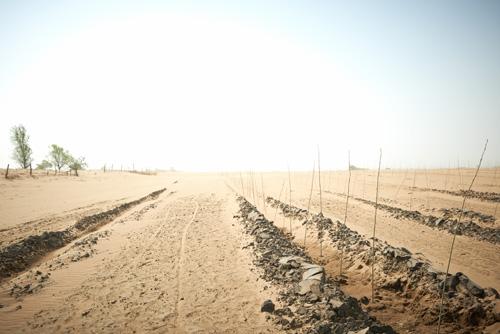 并三次组成种树志愿者队伍,亲赴内蒙古沙漠地区播种绿色希望.