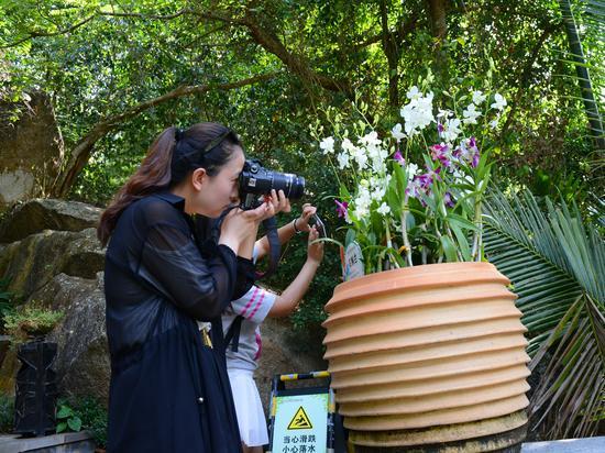 游客们纷纷用相机记录下热带天堂的美丽