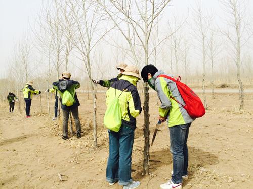 61内蒙古种树之行公益