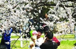 市民在杏花园内赏花。摄影 张扬