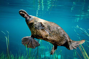 """""""活化石""""已经停止演化了吗?"""