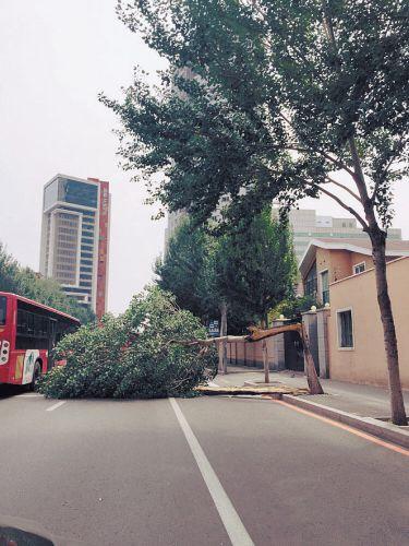 北三经街上,一棵树被吹折,所幸未砸到车、人。