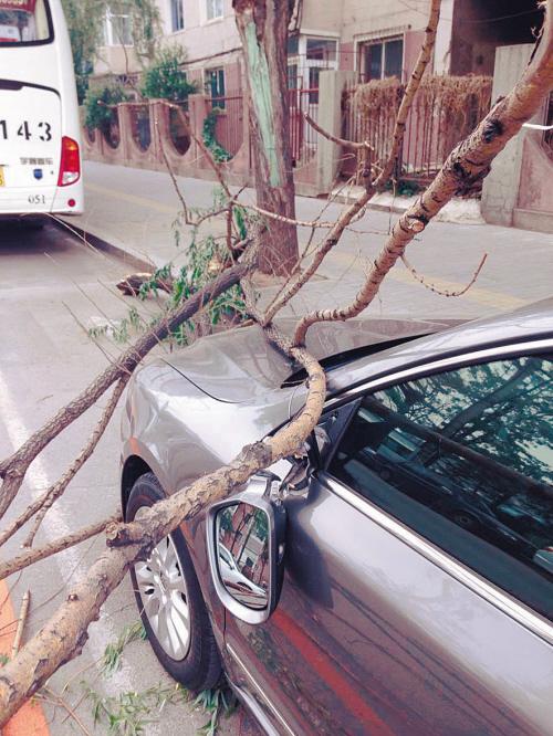 铁西区,折断的树枝砸伤私家车。