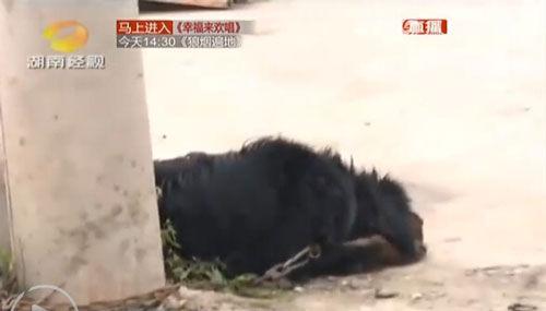 被打伤的狗