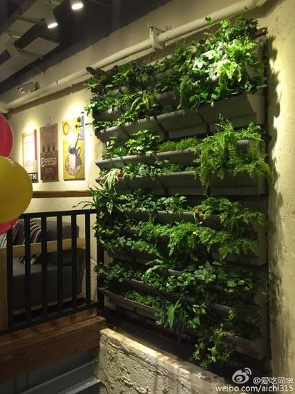 厦门再添高颜值咖啡馆 绿植爬满整个空间