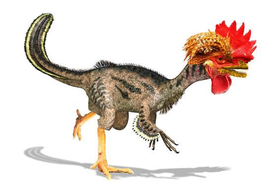 既然鸟是恐龙进化树上唯一没有灭绝的动物,为什么我们不能扳动遗传密码中的一些开关,让鸡来重现恐龙的荣光呢?