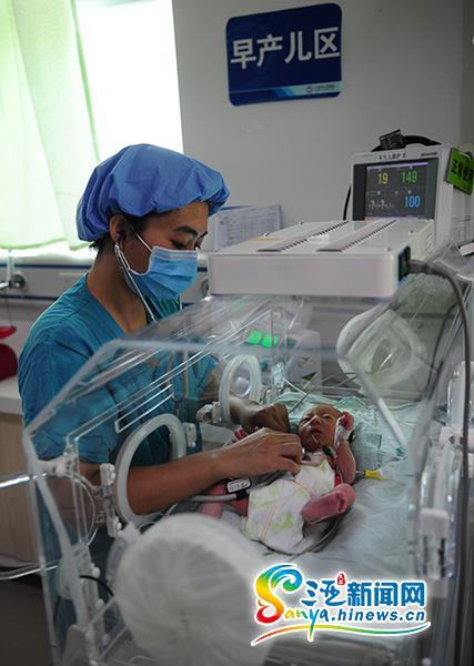 5月27日,医护人员在为多多进行例行检查。(三亚新闻网记者 沙晓峰 摄)
