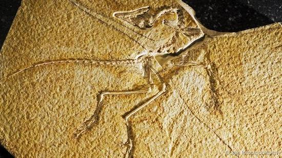 首个始祖鸟化石发现于1861年。