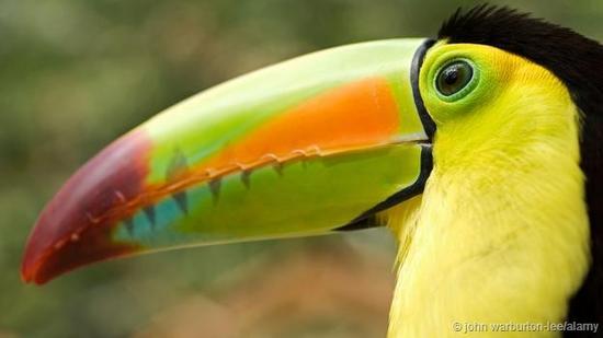 鸟类喙部形态大小不一<b