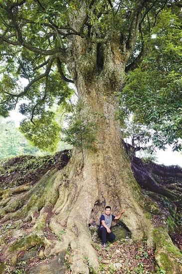 树与人的体积对比