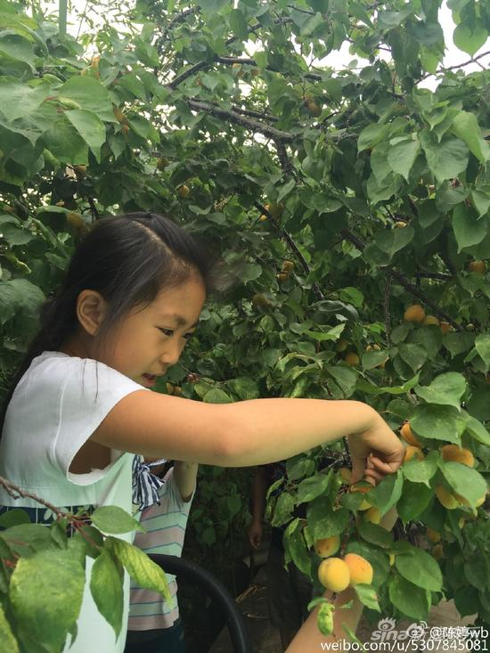 张艺谋女儿摘果子
