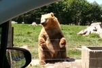 萌熊向游客挥手打招呼 手准确接面包
