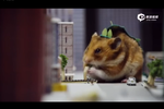 激萌!小仓鼠化身特摄片主角啃食大楼飞机