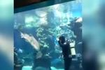 水族馆豹纹鲨卖萌求潜水员挠痒痒