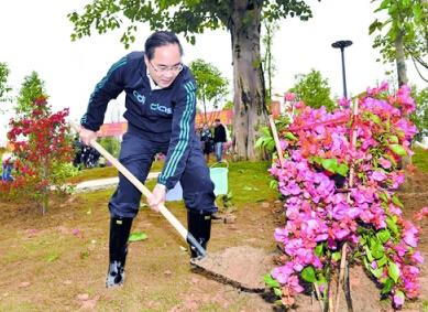 《南宁日报》报道,2015年3月12日植树节当天上午,余远辉种下三角梅 摄法制晚报深度记者张恩杰
