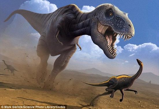 霸王龙的最高时速为29公里每小时,而博尔特是44公里每小时,因此可以轻而易举地跑在霸王龙前面——至少在短距离奔跑时是这样。图为霸王龙追逐似鸟龙(Ornithomimus dinosaur)的概念图。