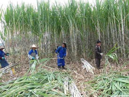 宜州产业优势——蔗糖