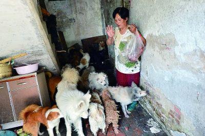 每到饭点儿,狗狗们都着急地围着杨晓云